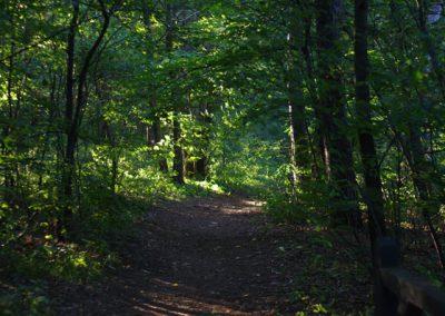 trail2l