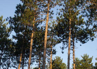 trees1b